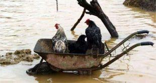صورة بدون تعليق : فيضانات المغرب