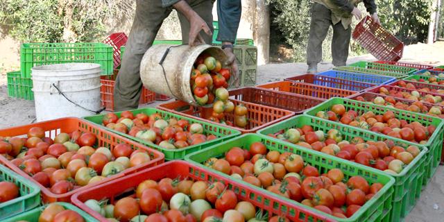 augmentation-fruits-légumes-en-russie